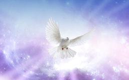 Holy Spirit 5
