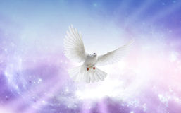 Holy Spirit; angel-love-blessings-angel-blog